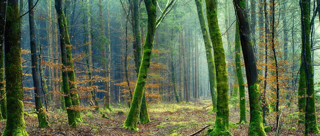 Wald mit Bäumen: Ökobanken stehen für nachhaltiges Wirtschaften für eine gesunde Umwelt