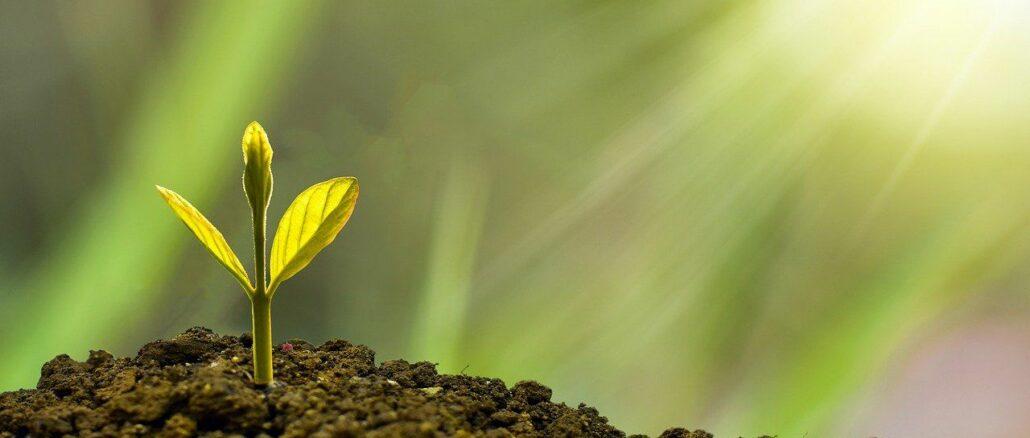 Wachsender Baum als Zeichen für Investition in sinnvolle Projekte. Die Kreditanstalt hat sich zur Förderung derselben verpflichtet!